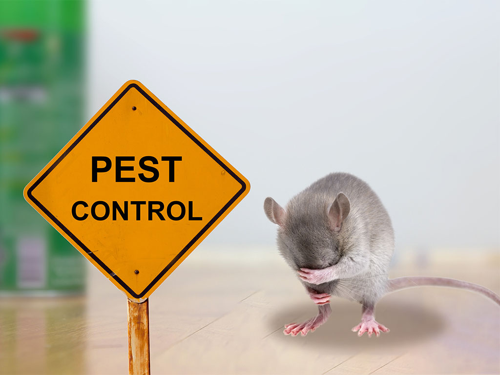 Mice & Rats Pest Control in Shoalhaven